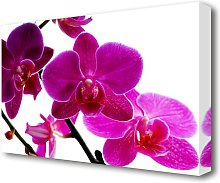 Cerise Pink Orchid On White Flowers Canvas Print