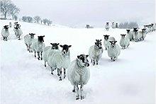 Chifang Gerahmter Print White Sheep in Snow