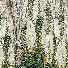 Climbing Ivy Mural Wallpaper (SqM)