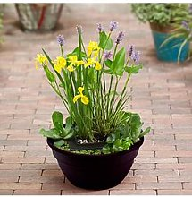 Complete Patio Pond Kit - Plants, Gravel And Bowl
