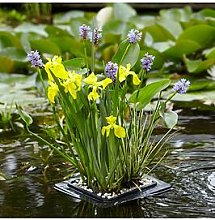 Complete Pond Floating Raft Kit -Plants, Gravel &