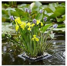 Complete Pond Floating Raft Kit -Plants, Gravel &