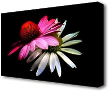 Cone Flowers Black Background Flowers Canvas Print