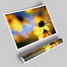 Cool Autumn Flowers' - Unframed Photographic