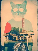 Cool Cat - Photographic Print on Paper East Urban