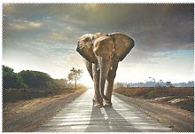 CPYang Placemats Set of 1,Africa Animal Elephant