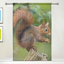 CPYang Sheer Curtain Cute Animal Squirrel Voile