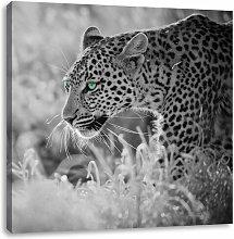 Creeping Leopard Art Print on Canvas East Urban