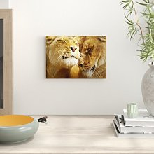 Cuddling Lions Photographic Print Big Box Art