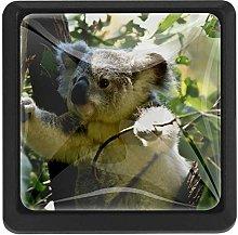 Cute Animal Koala Crystal Glass Cabinet Drawer