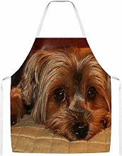Cute Yorkshire Terrier Home Kitchen Cooking Grill