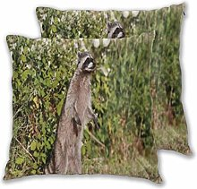 DECISAIYA Throw Pillow Covers Pack of 2,Raccoon
