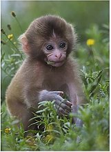 Diamond Painting by Number Kits Animal Monkey