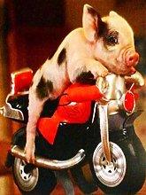 Diamond Painting kit Little Pig Riding a
