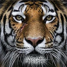 DIY 5D Diamond Painting Kits Animal Tiger Full