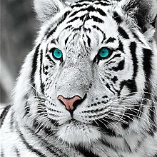 DIY 5D Diamond Painting Kits White Tiger Full