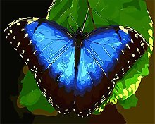 DIY Number Painting Drawing Canvas Blue Butterfly