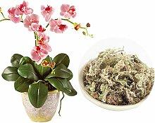 DONEMORE7 Sphagnum Moss 6L 12L Plants Flowerpot