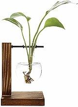 Doolland Hydroponic Glass Bulb Planter Vase Test