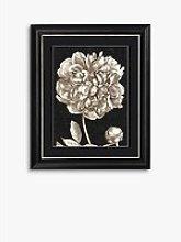 Dramatic Peony I Framed Print & Mount, 60 x 50cm,