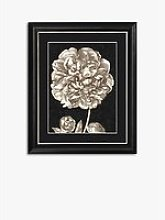 Dramatic Peony II Framed Print & Mount, 60 x 50cm,