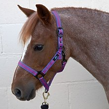 Duo Head Collar (Pony) (Purple/Fuchsia) - HY