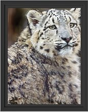 Elegant Snow Leopard Framed Graphic Art Print East