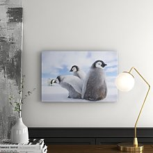 Emperor Penguin Chick Group Graphic Art Print on
