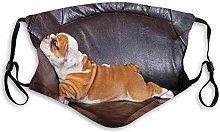 English Bulldog, Puppy Resting on a Sofa Funny