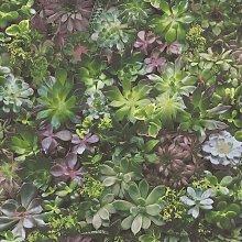 Evergreen Wallpaper Succulent Green and Purple -