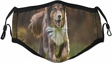Face Scarf Beautiful Australian Shepherd Running