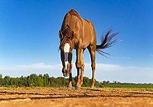 Farm Brown Mane horse-50x60cm,DIY 5D Diamond