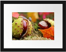 First Chestnut Opening Framed Photographic Art