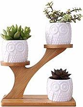Fliyeong Mini Owl Flower Pots, Owl Succulent