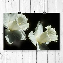 Flower Daffodil Photographic Print Big Box Art
