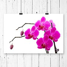 Flower Orchid Photographic Print Big Box Art