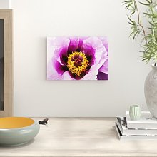 Flower Peony Photographic Print Big Box Art