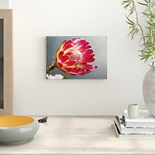 Flower Protea Photographic Print Big Box Art