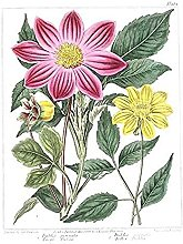 Flower Purple And Yellow Dahlia Art Print Canvas