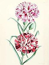 Flower Striped Pinks Petals Large Wall Art Print
