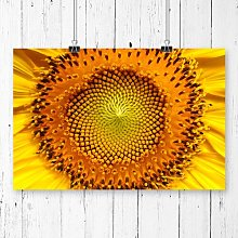 Flower Sunflowers Photographic Print Big Box Art