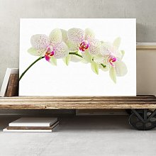 Flower White Orchid Photographic Print on Canvas