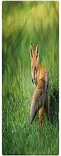 Fox Runner Rug, 2'x4', Fox with Fluffy