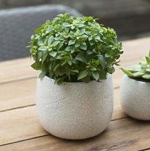 Garden Trading - Large White Ceramic Crackled