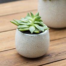 Garden Trading - Small White Ceramic Crackled
