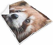 Generic Branded Animal Red Panda Soft Square