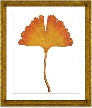 Ginkgo Leaf 1 - Framed Print & Mount, 56 x 46cm,