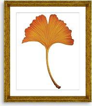 Ginkgo Leaf 4 - Framed Print & Mount, 56 x 46cm,