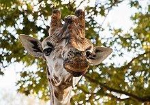 Giraffe Long neck-40x40cm,DIY 5D Diamond Painting