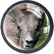 Glass Cabinet Knobs Animal Goat with 3D Visual